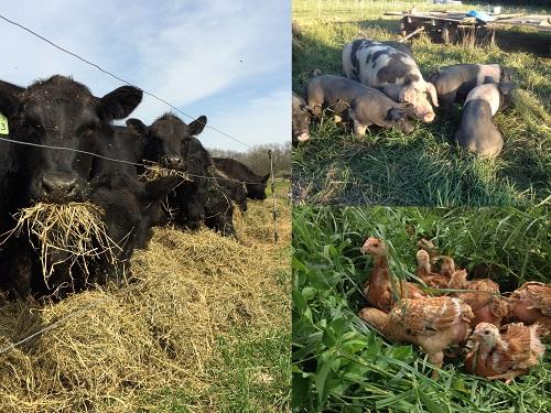 Meat Share FAQ's