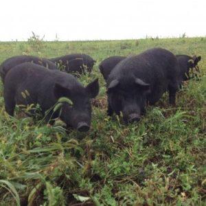 Grain Free Pastured Pork