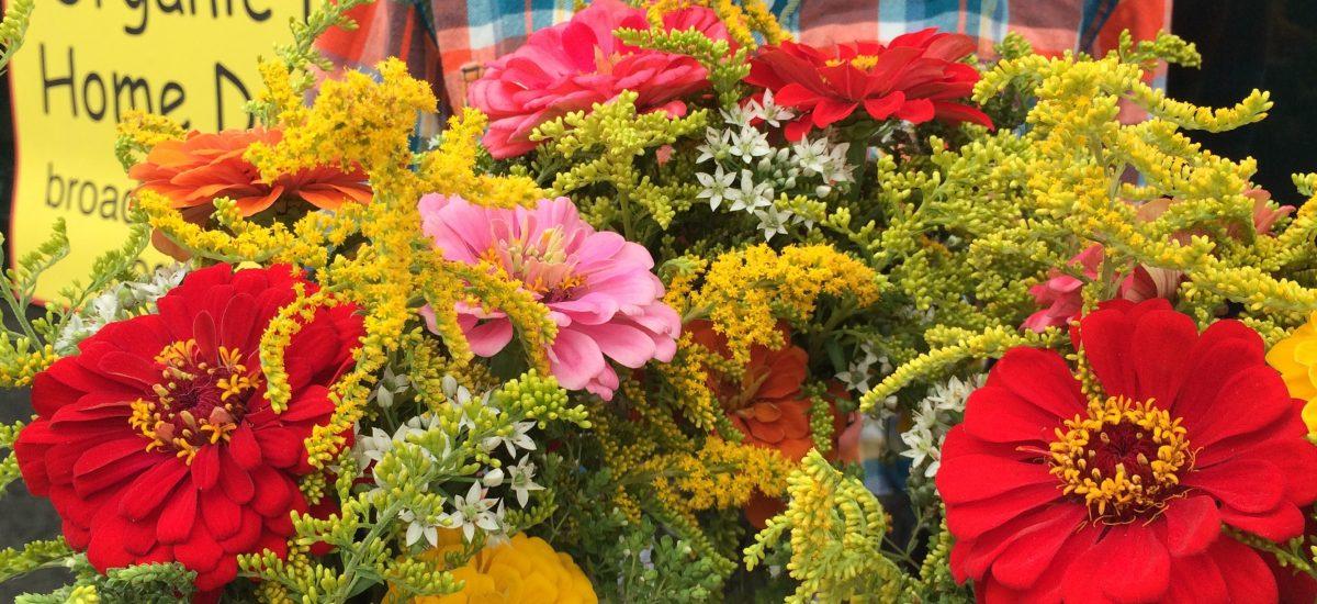 Susannah's Flowers
