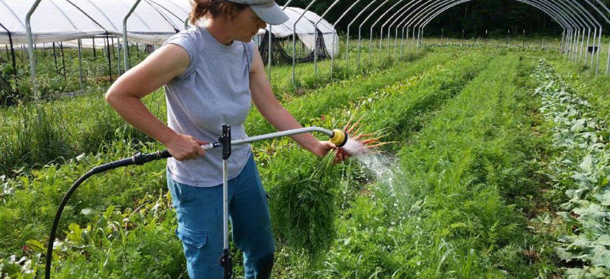 Anita Watering Carrots