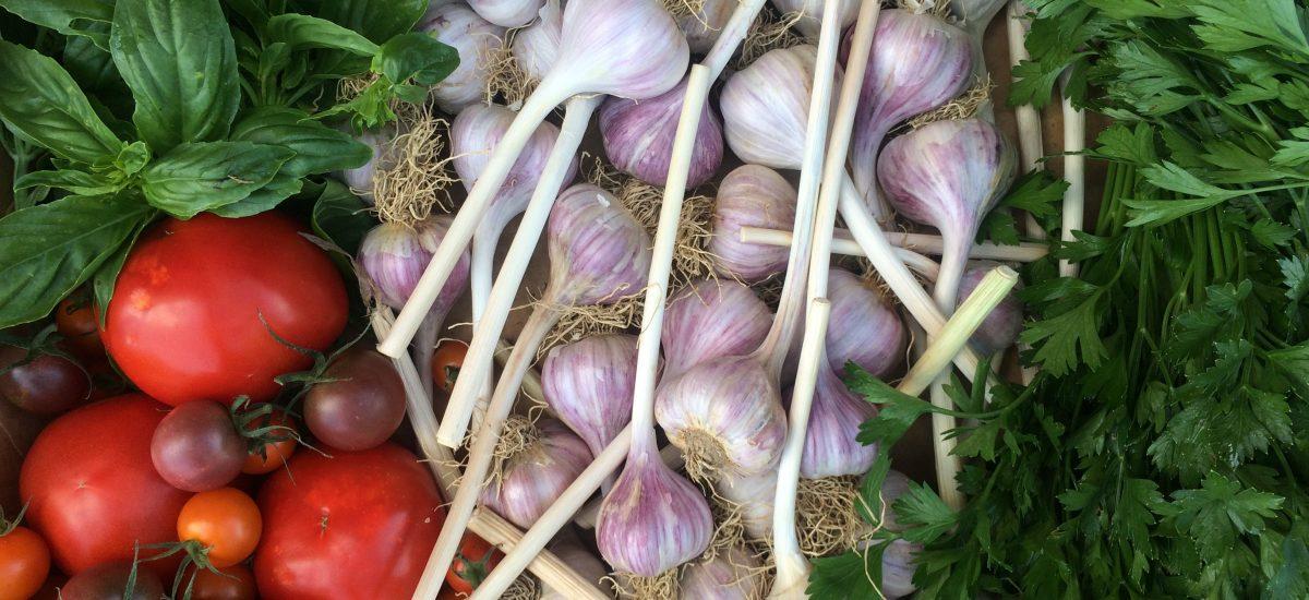 Tomato Garlic Parsley