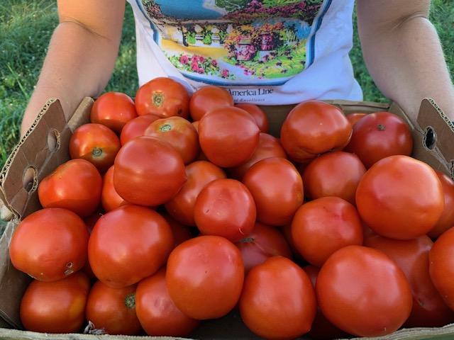 Whole Tomato Pasta Sauce