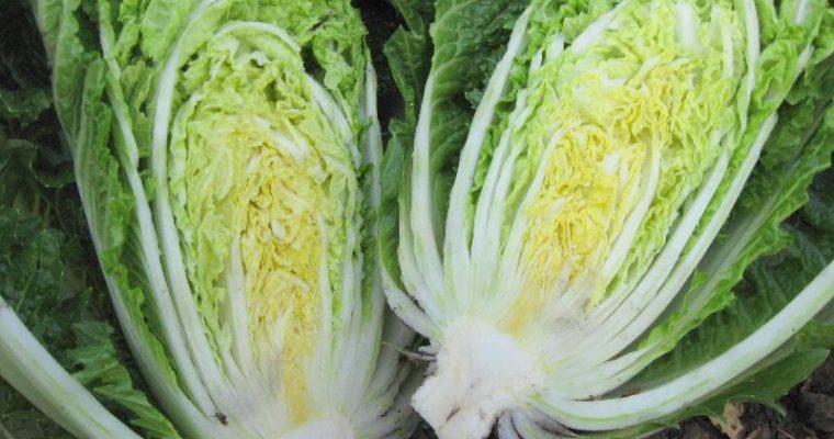 Napa Cabbage Salad with Apples & Pecans