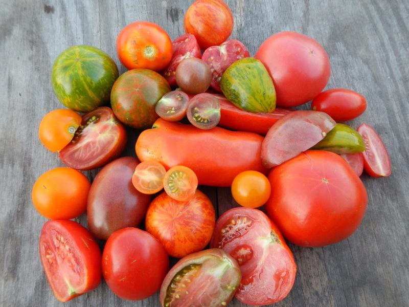 Tomato Preservation – Make it Easy
